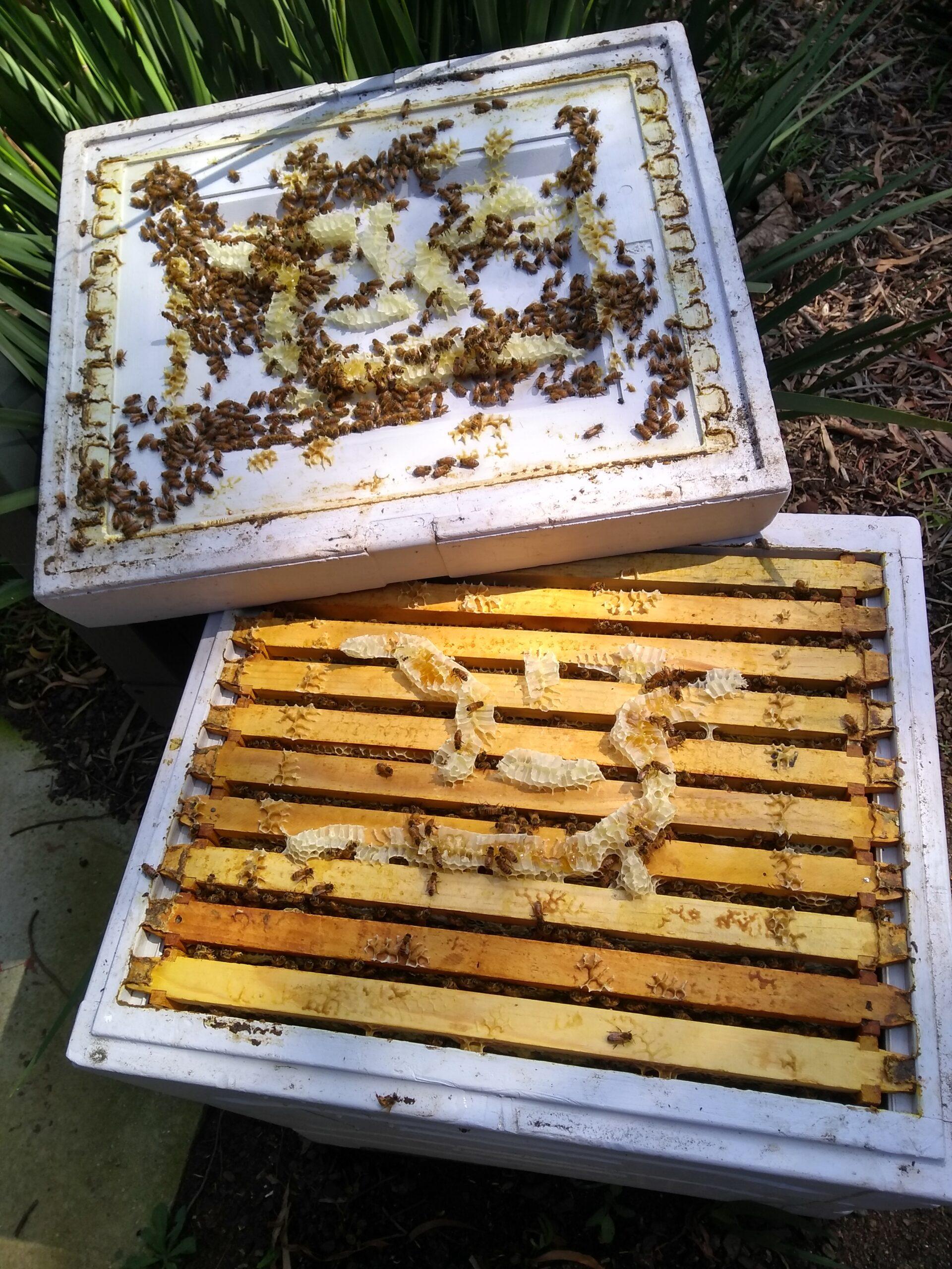 Hive ready to split